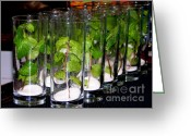 Glasses Greeting Cards - Mojitos in the making Greeting Card by Karen Wiles
