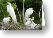 Giclee Photo Greeting Cards - Mom n Pop n Chicks Greeting Card by Suzanne Gaff