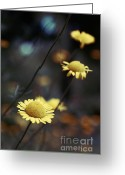Flower Photography Greeting Cards - Momentum 01-02a Greeting Card by Variance Collections