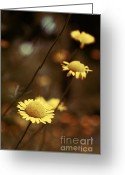 Flower Photography Greeting Cards - Momentum 03a Greeting Card by Variance Collections