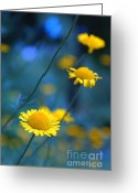 Flower Photography Greeting Cards - Momentum 04a Greeting Card by Variance Collections
