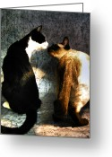 Siamese Photo Greeting Cards - Momo and Chi Greeting Card by Laura Nagel