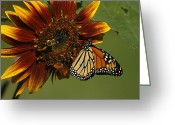Bumble Greeting Cards - Monarch and The Bee Greeting Card by Cindi Ressler