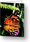 White And Purple Wings Greeting Cards - Monarch Butterfly 2 Greeting Card by Marcus Dagan