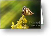 Feeding Greeting Cards - Monarch Butterfly Greeting Card by Carlos Caetano