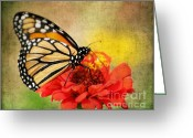 Antenna Greeting Cards - Monarch Butterfly Greeting Card by Darren Fisher