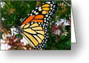 Tamara Stoneburner Greeting Cards - Monarch Butterfly Migration I Greeting Card by Tamara Stoneburner