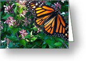 Tamara Stoneburner Greeting Cards - Monarch Butterfly Migration II Greeting Card by Tamara Stoneburner