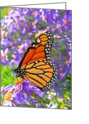 Feed Greeting Cards - Monarch Butterfly Greeting Card by Olivier Le Queinec
