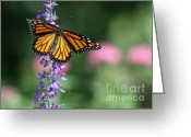 Etherial Greeting Cards - Monarch Butterfly on Purple Flowers Greeting Card by Sabrina L Ryan