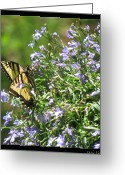 Designer Butterfly Works Photo Greeting Cards - Monarch Floral Greeting Card by Debra     Vatalaro