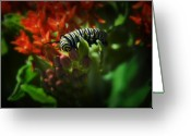 Caterpillar Greeting Cards - Monarch Greeting Card by Fred Lassmann