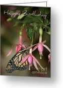 Birthday Cards  Greeting Cards - Monarch in the Fuchsias - Birthday Card Greeting Card by Carol Groenen