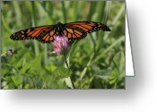 Summertime Drink Greeting Cards - Monarch Majesty Greeting Card by Dianne Ahto