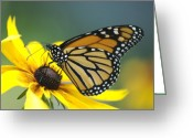 Susan Greeting Cards - Monarch Greeting Card by Michael Peychich
