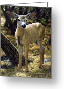 Deer Greeting Cards - Monarch Moment Greeting Card by Crista Forest