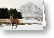 Most Photographed Photo Greeting Cards - Monarch of the Glen Greeting Card by Maria Gaellman