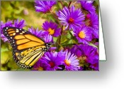 Mt. Washington Greeting Cards - Monarch on Mt. Washington Greeting Card by Ches Black
