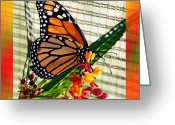 Feeding Mixed Media Greeting Cards - Monarch Rainbow Greeting Card by Andee Photography