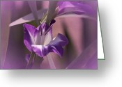 Purple Gladiola Greeting Cards - Mondays Gladiola No. 2 Greeting Card by Richard Cummings