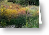 Adrienne Petterson Greeting Cards - Monet-esque Autumn Greeting Card by Adrienne Petterson