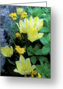 Featured Artwork Prints Greeting Cards - Monets Fancy Tulips Greeting Card by Kathy Yates