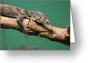 Lizard Greeting Cards - Monitor Lizard Greeting Card by Photography by Zack Podratz