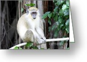 Fig Tree Greeting Cards - Monkey on a Tree Greeting Card by Sophie Vigneault