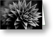 Pointed Greeting Cards - Monkey Puzzle Greeting Card by Wenata Babkowski