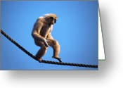 Rope Greeting Cards - Monkey Walking On Rope Greeting Card by John Foxx