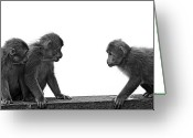 Three Animals Greeting Cards - Monkeys Getting Ready For Fight At Chinese Temple Greeting Card by Flemming Søgaard Jensen