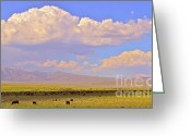 Open Range Greeting Cards - Mono Lake Rangelands Greeting Card by Gus McCrea