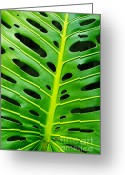Striped Greeting Cards - Monstera leaf Greeting Card by Carlos Caetano