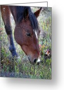 Diane Berry Digital Art Greeting Cards - Montana Horse Greeting Card by Diane E Berry