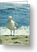 Seashore Greeting Cards - Montauk Gull Greeting Card by Tom Hedderich