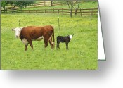 Calf Greeting Cards Greeting Cards - MOOma and Calf Greeting Card by Wendy McKennon