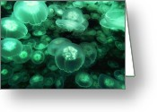 Large Group Greeting Cards - Moon Jelly Aurelia Aurita Group Greeting Card by Hiroya Minakuchi