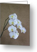 Cultivars Greeting Cards - Moon Orchid Greeting Card by Viktor Savchenko