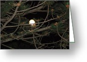 Full Moons Greeting Cards - Moon Through Pines Greeting Card by Aimee L Maher
