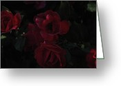 In Focus Greeting Cards - Moonlight Roses Greeting Card by Valerie Rakes