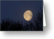 Carolina Greeting Cards - Moonset Over Trees Greeting Card by Doris Rudd Designs, Photography
