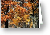 Igdaily Greeting Cards - More #fall #colors Greeting Card by Adam Romanowicz