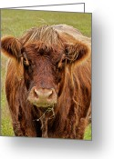 Head-shot Greeting Cards - More Than A Number Greeting Card by Odd Jeppesen
