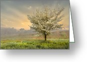 Blossoms Greeting Cards - Morning Celebration Greeting Card by Debra and Dave Vanderlaan