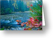 Red Leaves Greeting Cards - Morning color Greeting Card by Idaho Scenic Images Linda Lantzy