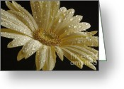 Dew Drops Greeting Cards - Morning Dew Greeting Card by Arnie Goldstein