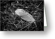 Black Love Greeting Cards - Morning dew Greeting Card by Bob Orsillo