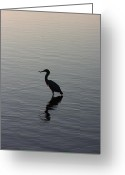 Black Beak Greeting Cards - Morning Fisher Greeting Card by David Paul Murray