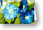 Blossoms Greeting Cards - Morning Glories in Blue Greeting Card by Janis Grau