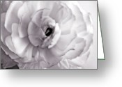 Black And White Photos Mixed Media Greeting Cards - Morning Glory - White Rose Flower Photograph Greeting Card by Artecco Fine Art Photography - Photograph by Nadja Drieling